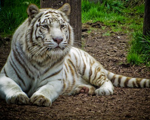 yorks wild animal kingdom